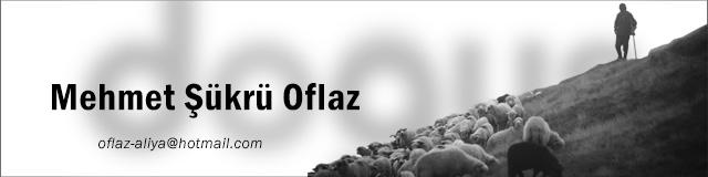 Mehmet Sukru Oflaz 02